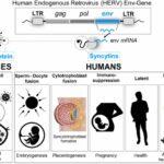 Perché i vaccini covid-19 potrebbero influire sulla fertilità