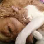 Secondo gli esperti c'è bisogno di vaccino anti-covid anche per cani e gatti