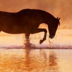 Bevi dove beve il cavallo, lui non berrà mai acqua cattiva